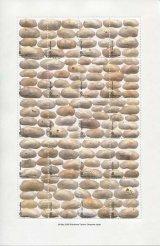太田三郎「On the Beach」より「Beach shells 」A(額付き)