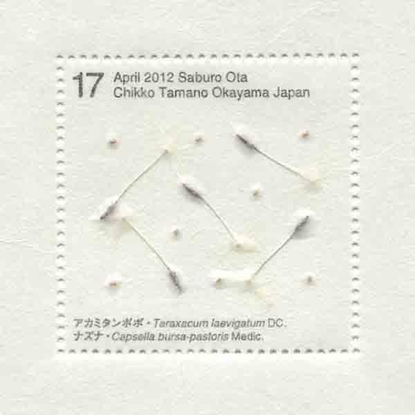 画像2: 太田三郎「Seed Project アカミタンポポ、ナズナ」(額付き)