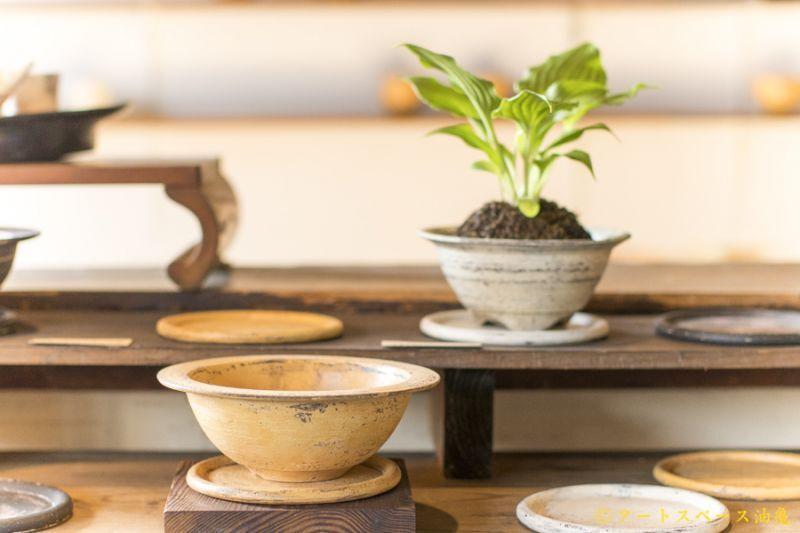 画像1: 大澤哲哉 植木鉢(Rim bowl) 黄【アソート作品】