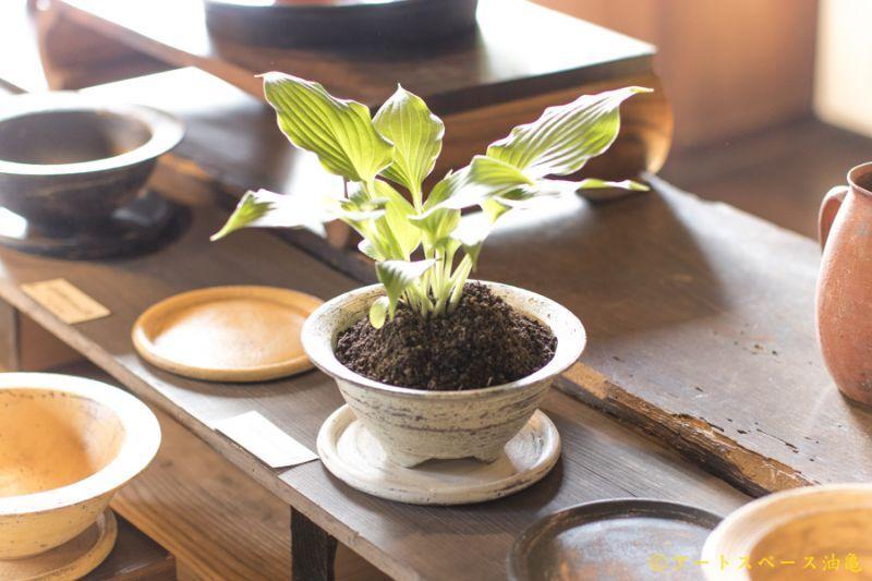 画像1: 大澤哲哉 植木鉢(Rim bowl) 白【アソート作品】
